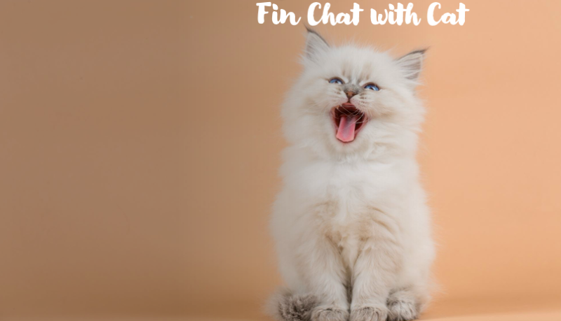 fin chat with cat